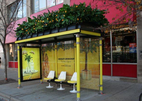 lemon-drop-bus-stop